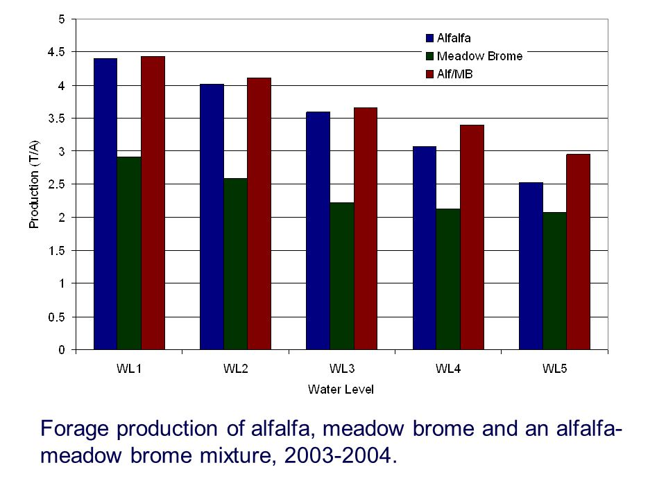 Forage production of alfalfa, meadow brome and an alfalfa-meadow brome mixture, 2003-2004.