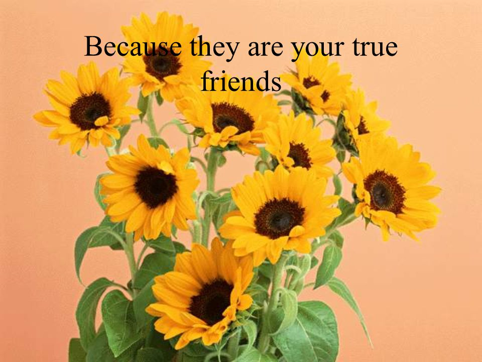 Because they are your true friends
