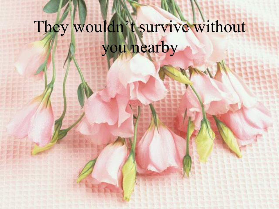 They wouldn't survive without you nearby