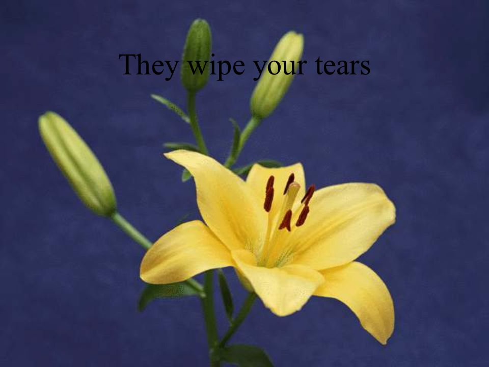They wipe your tears