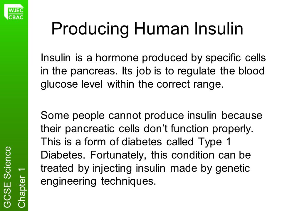 Producing Human Insulin