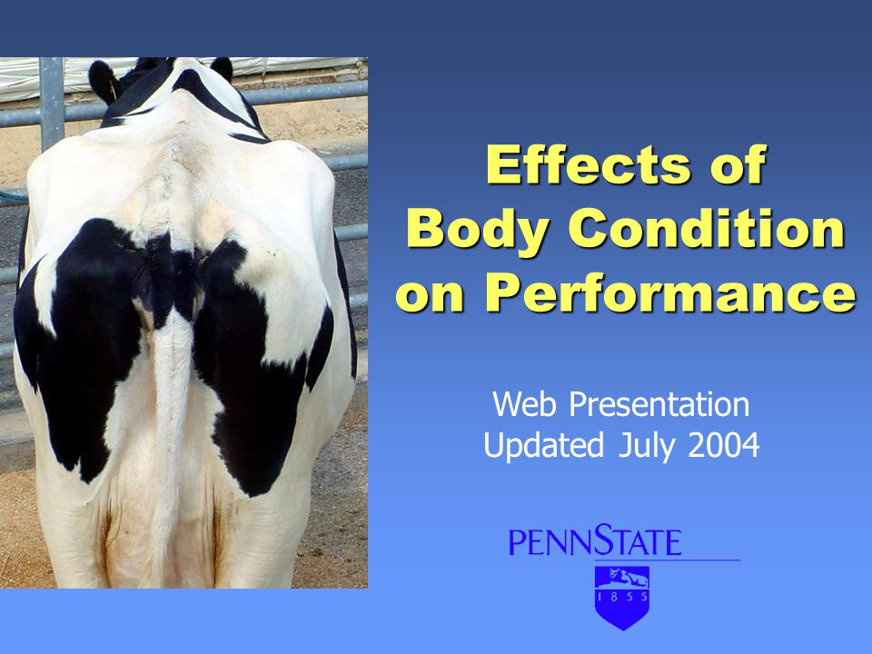 Effects of Body Condition on Performance