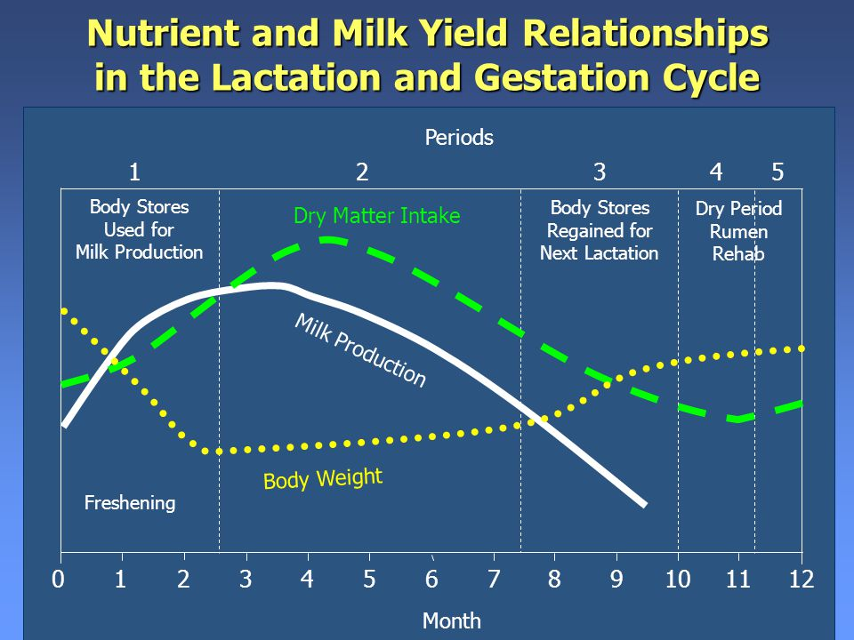 Nutrient and Milk Yield Relationships in the Lactation and Gestation Cycle