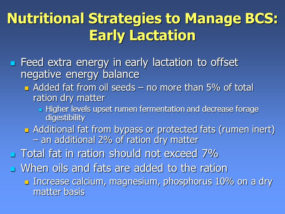 Nutritional Strategies to Manage BCS: Early Lactation