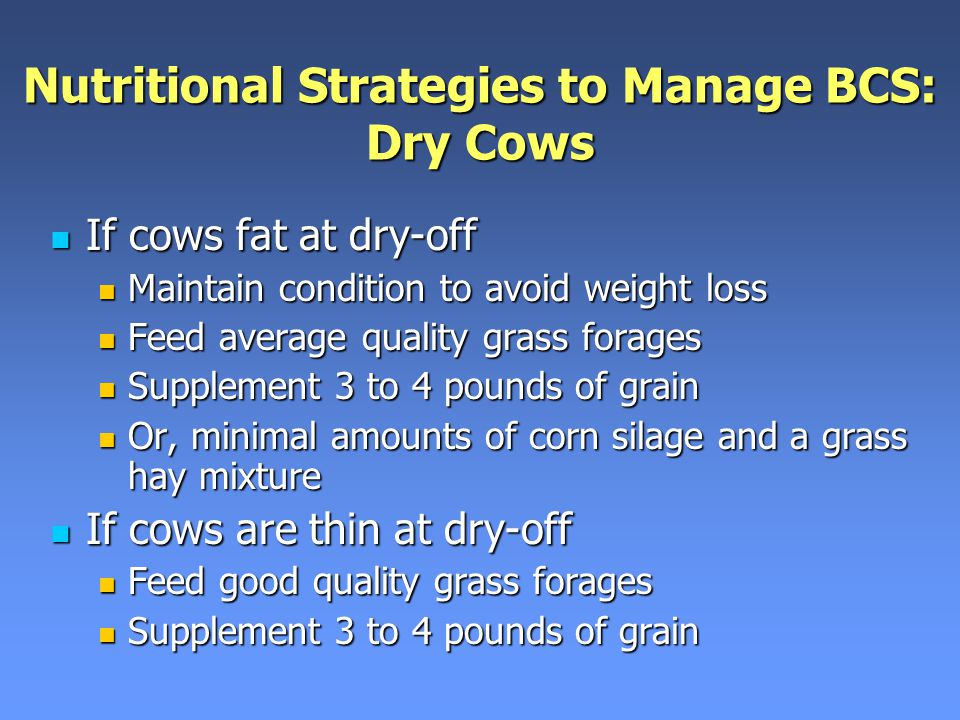 Nutritional Strategies to Manage BCS: Dry Cows