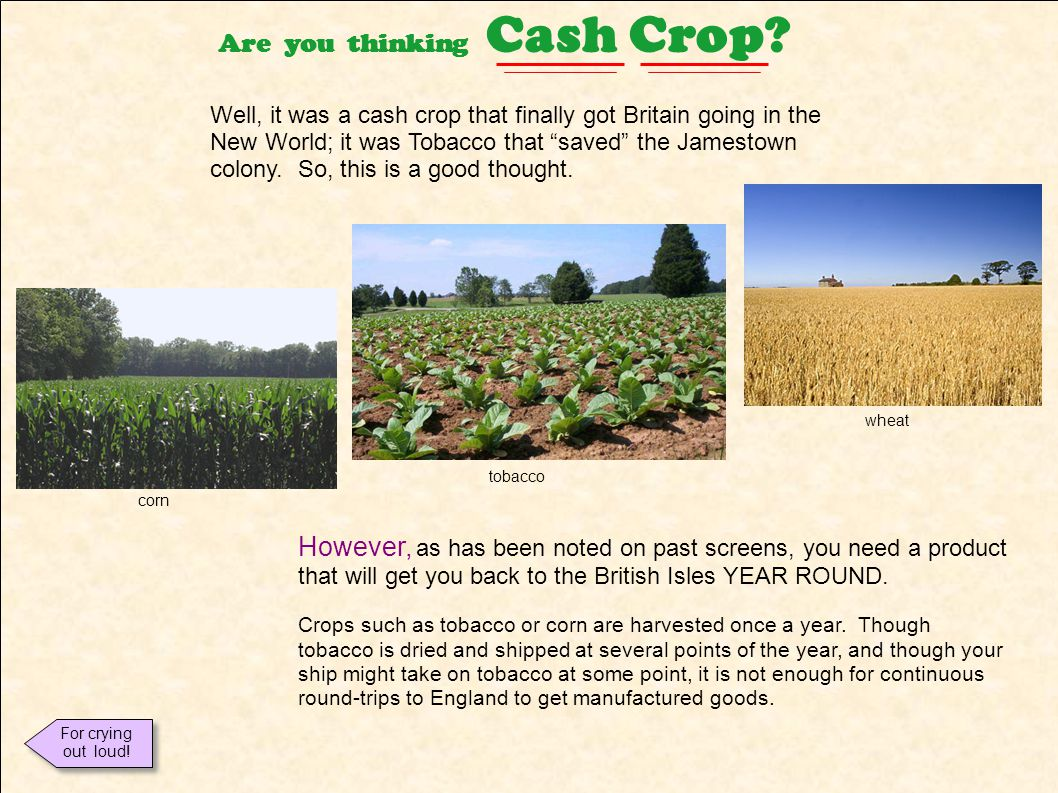 Are you thinking Cash Crop