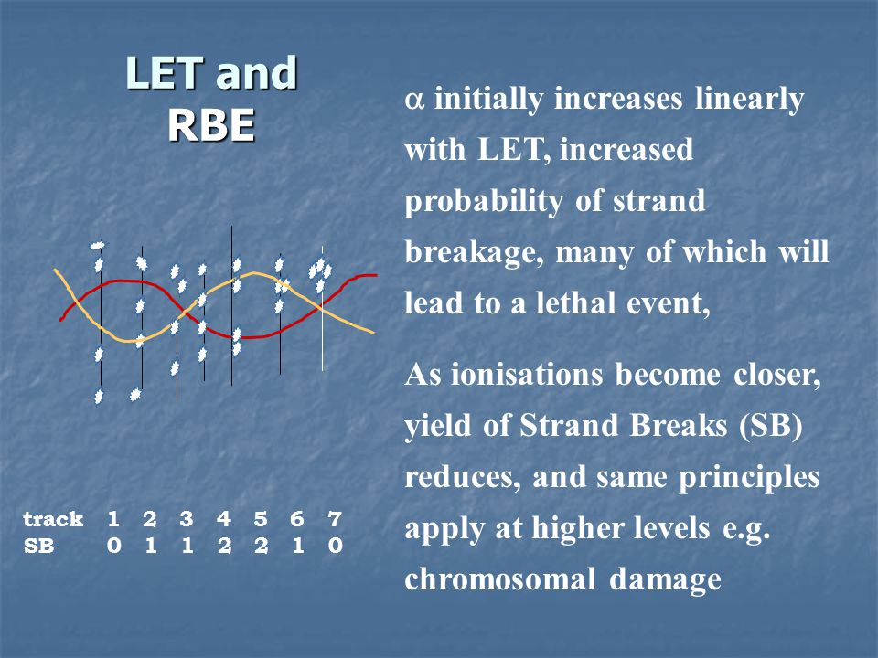 LET and RBE  initially increases linearly with LET, increased probability of strand breakage, many of which will lead to a lethal event,