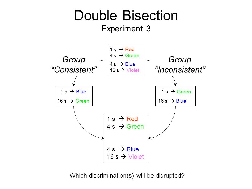 Double Bisection Experiment 3