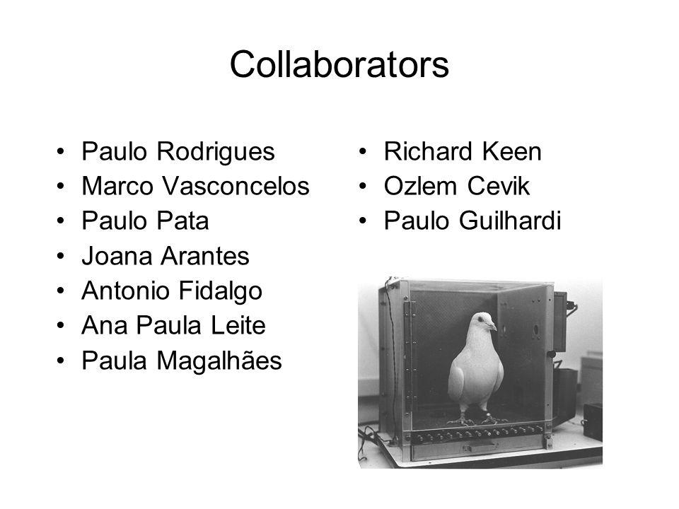 Collaborators Paulo Rodrigues Marco Vasconcelos Paulo Pata