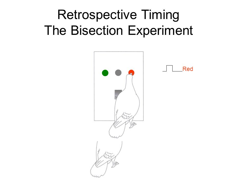Retrospective Timing The Bisection Experiment