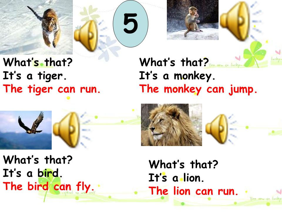 5 What's that It's a tiger. The tiger can run. What's that