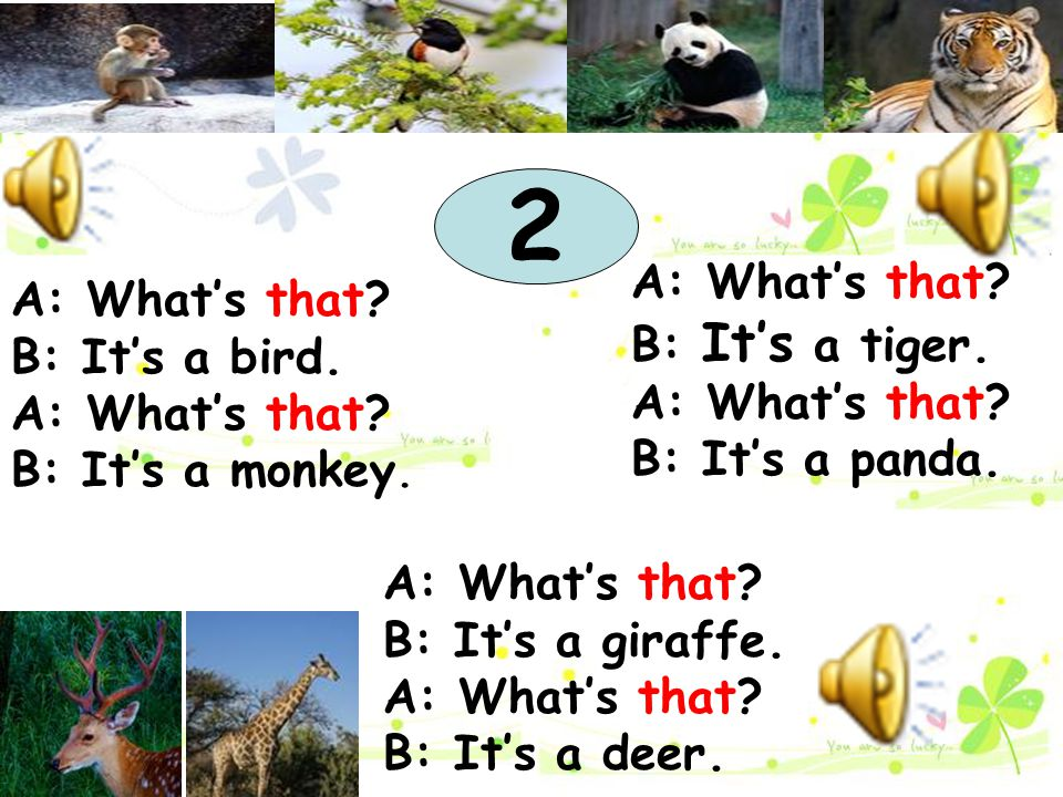2 A: What's that A: What's that B: It's a tiger. B: It's a bird.