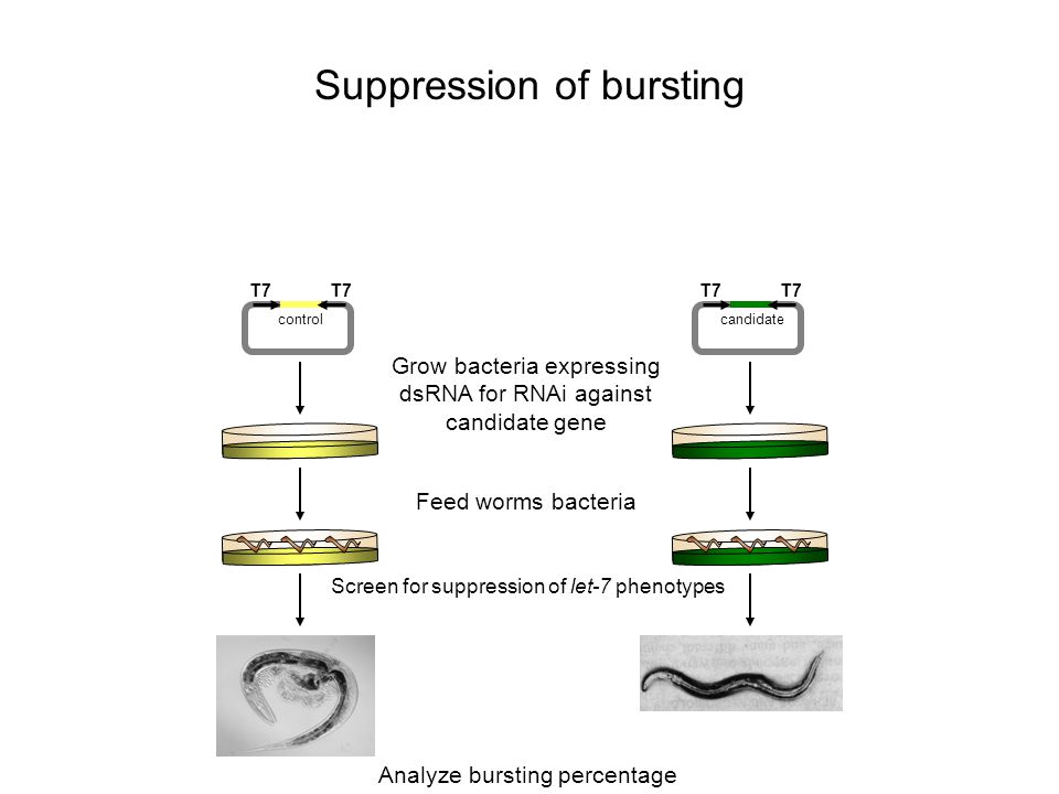 Suppression of bursting
