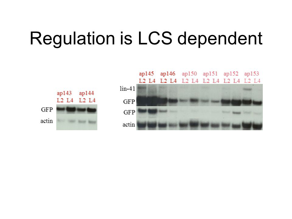 Regulation is LCS dependent