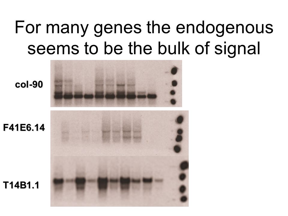 For many genes the endogenous seems to be the bulk of signal