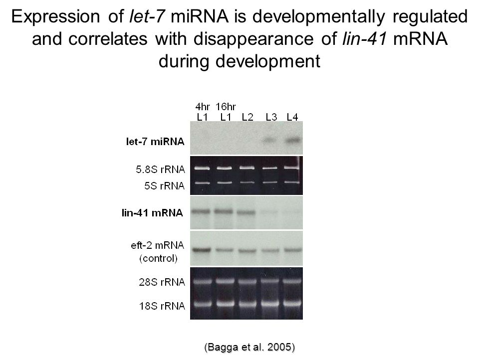 Expression of let-7 miRNA is developmentally regulated and correlates with disappearance of lin-41 mRNA during development