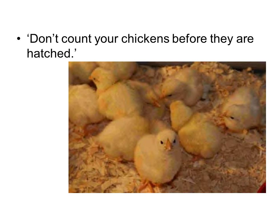 'Don't count your chickens before they are hatched.'