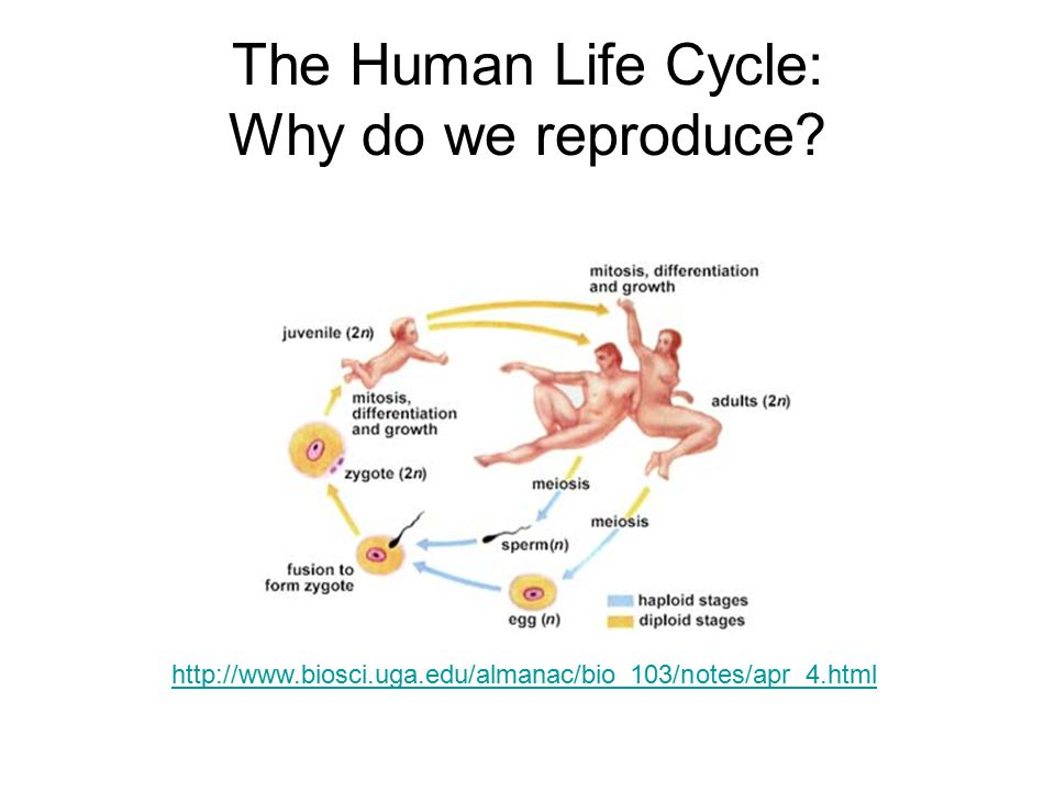 The Human Life Cycle: Why do we reproduce