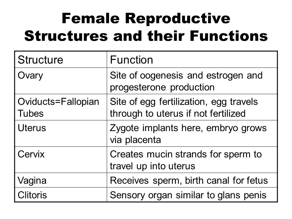 Female Reproductive Structures and their Functions