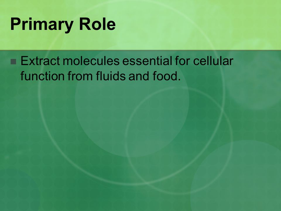 Primary Role Extract molecules essential for cellular function from fluids and food.