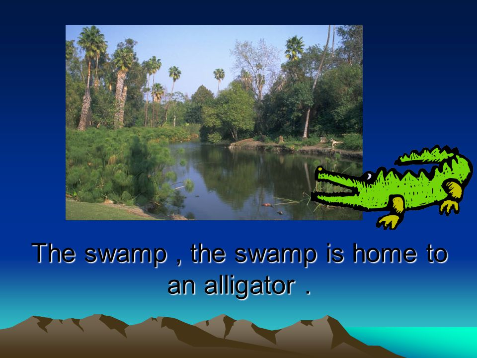 The swamp , the swamp is home to an alligator .