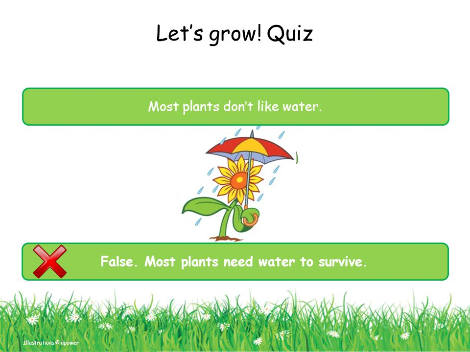 False. Most plants need water to survive.