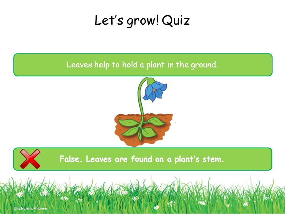 False. Leaves are found on a plant's stem.
