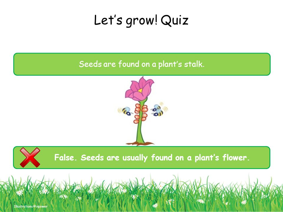 False. Seeds are usually found on a plant's flower.