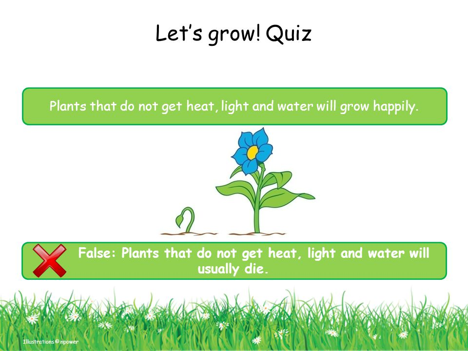 False: Plants that do not get heat, light and water will usually die.