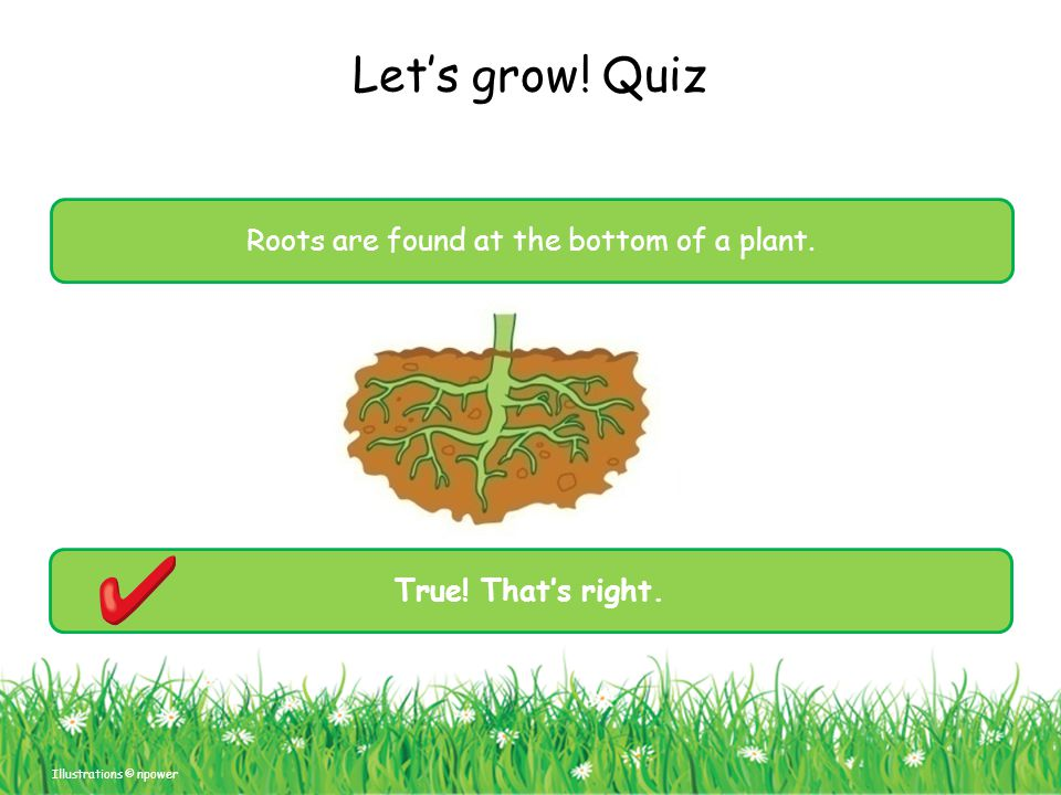 Roots are found at the bottom of a plant.