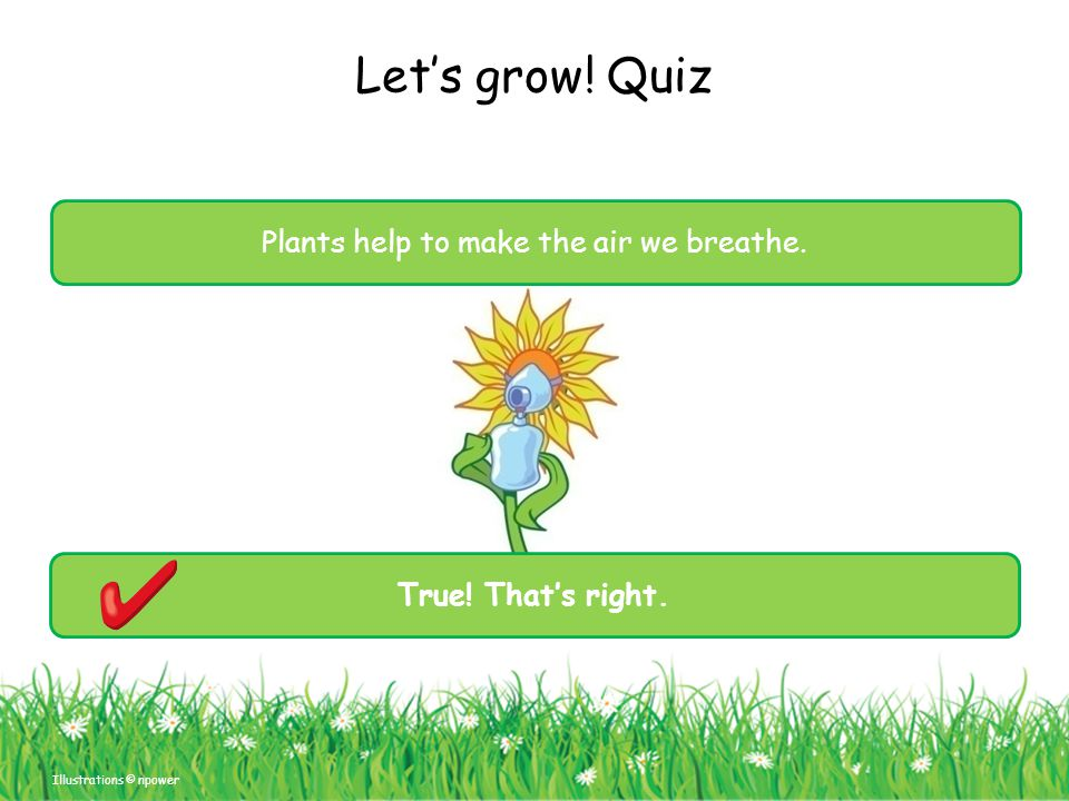 Plants help to make the air we breathe.
