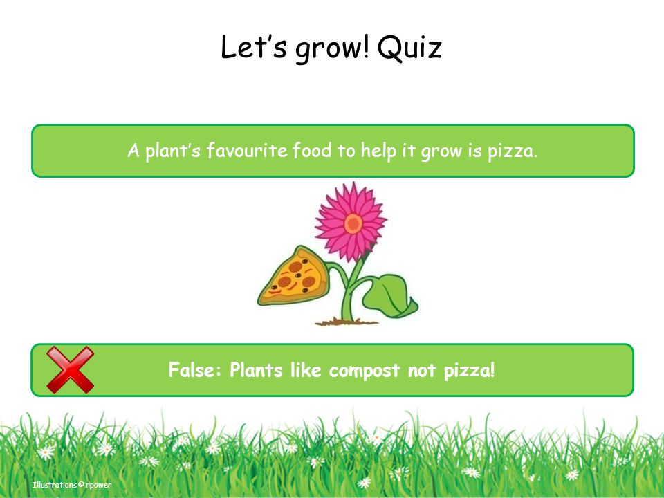 False: Plants like compost not pizza!