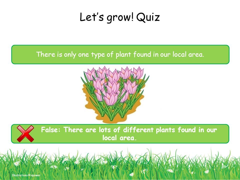 False: There are lots of different plants found in our local area.
