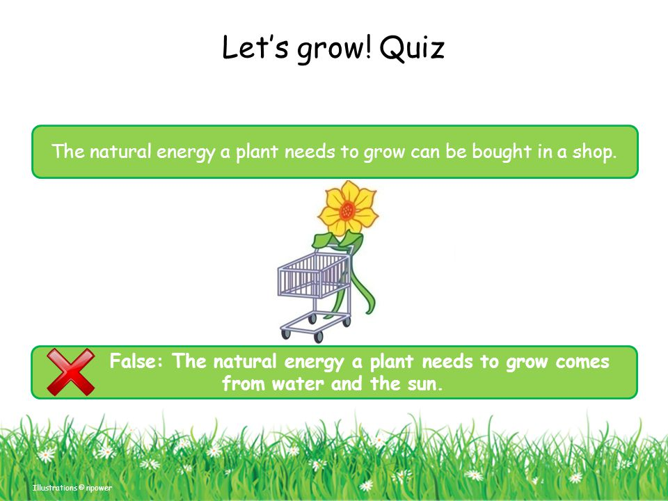 The natural energy a plant needs to grow can be bought in a shop.