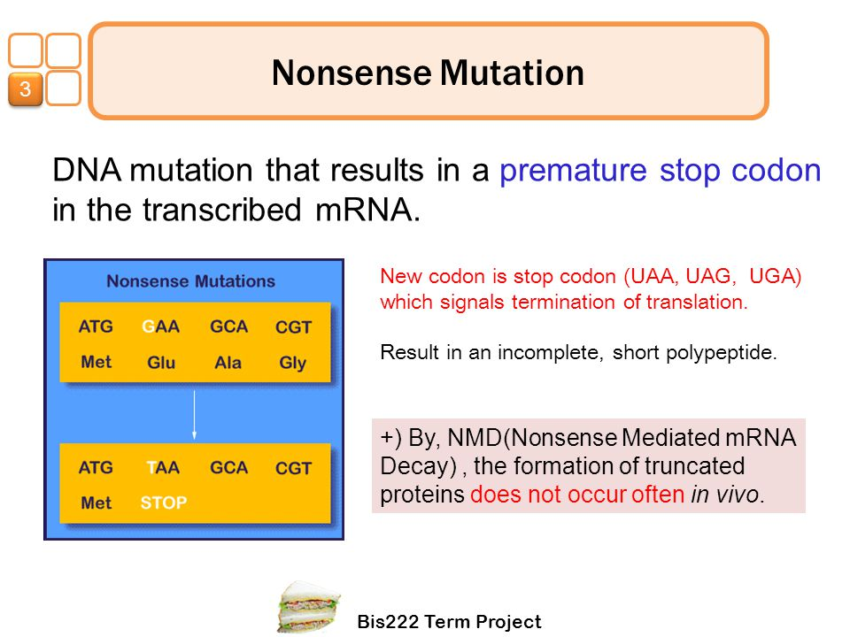 3 Nonsense Mutation. DNA mutation that results in a premature stop codon in the transcribed mRNA.