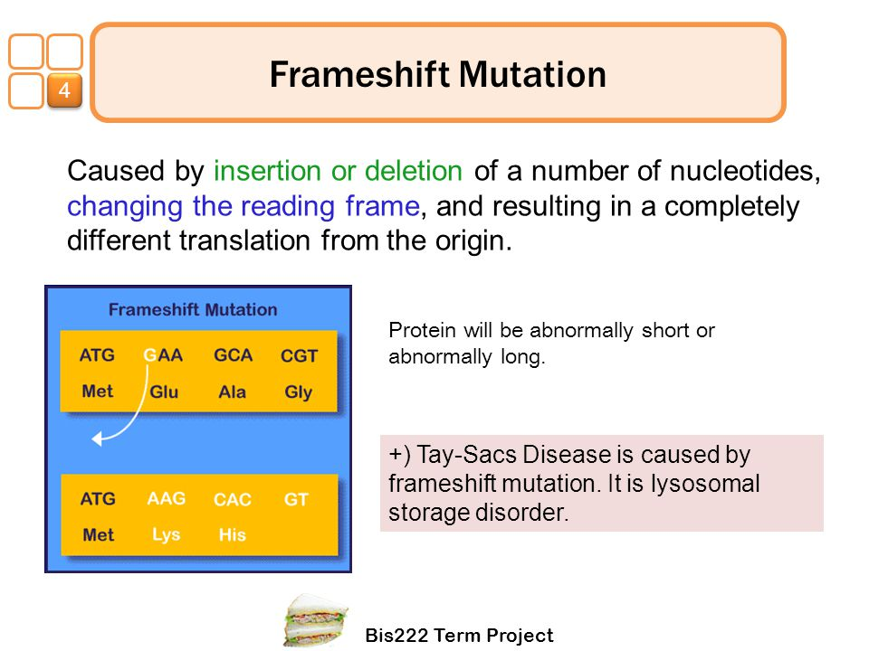 4 Frameshift Mutation.