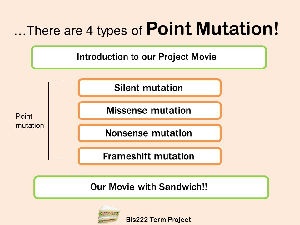 …There are 4 types of Point Mutation!