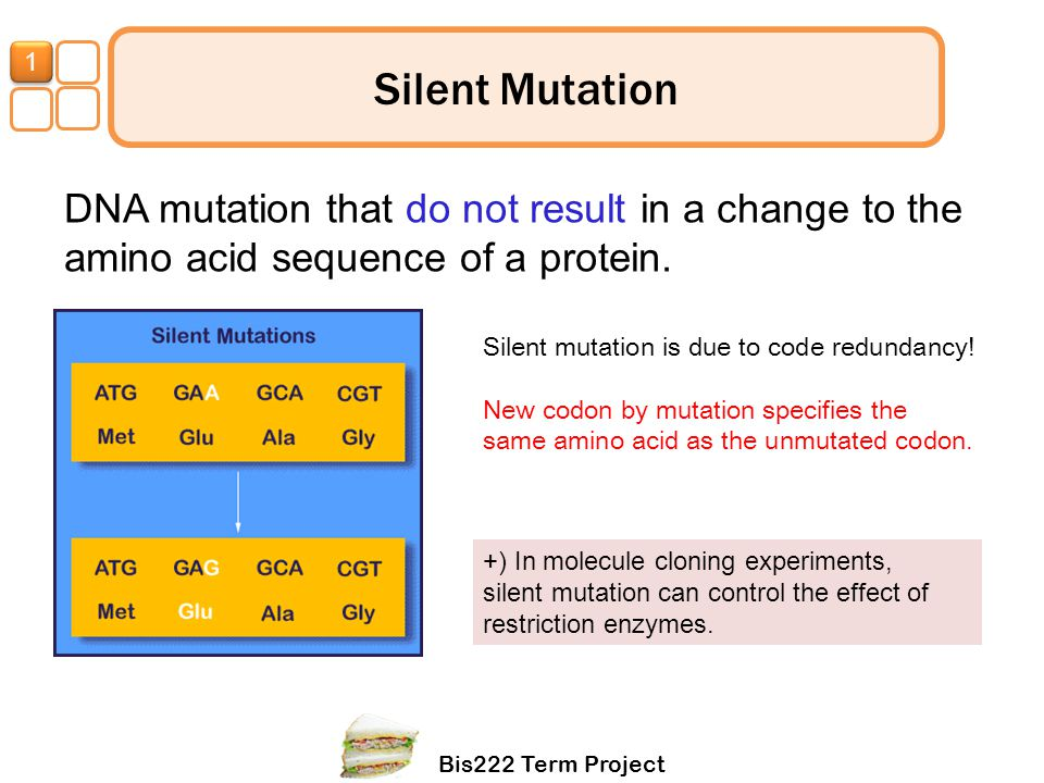 1 Silent Mutation. DNA mutation that do not result in a change to the amino acid sequence of a protein.