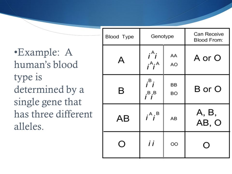 Example: A human's blood type is determined by a single gene that has three different alleles.