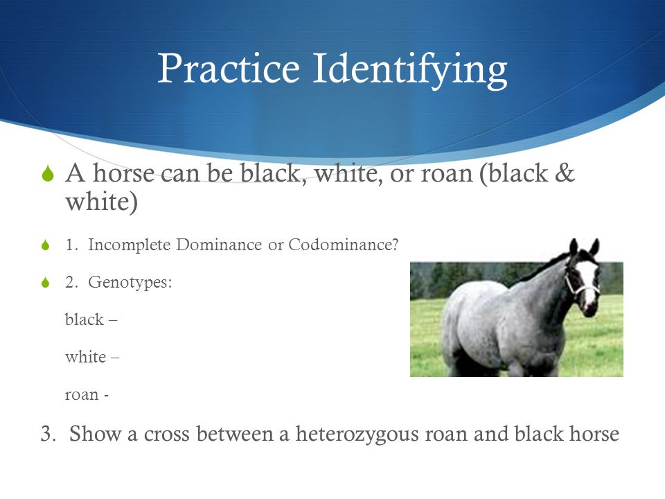 Practice Identifying A horse can be black, white, or roan (black & white) 1. Incomplete Dominance or Codominance