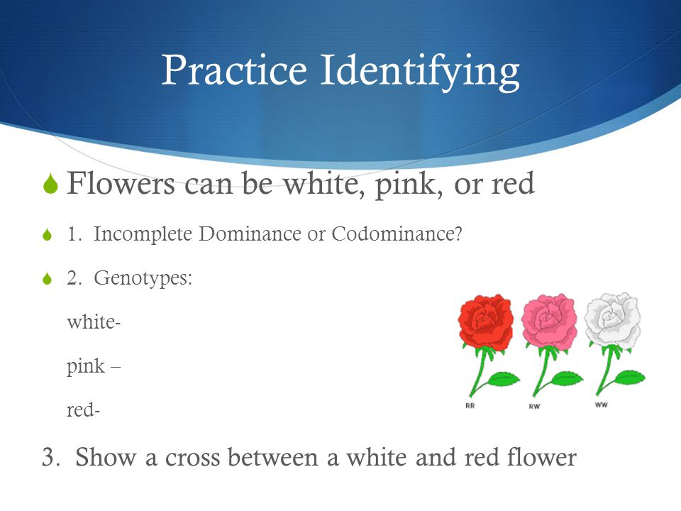 Practice Identifying Flowers can be white, pink, or red
