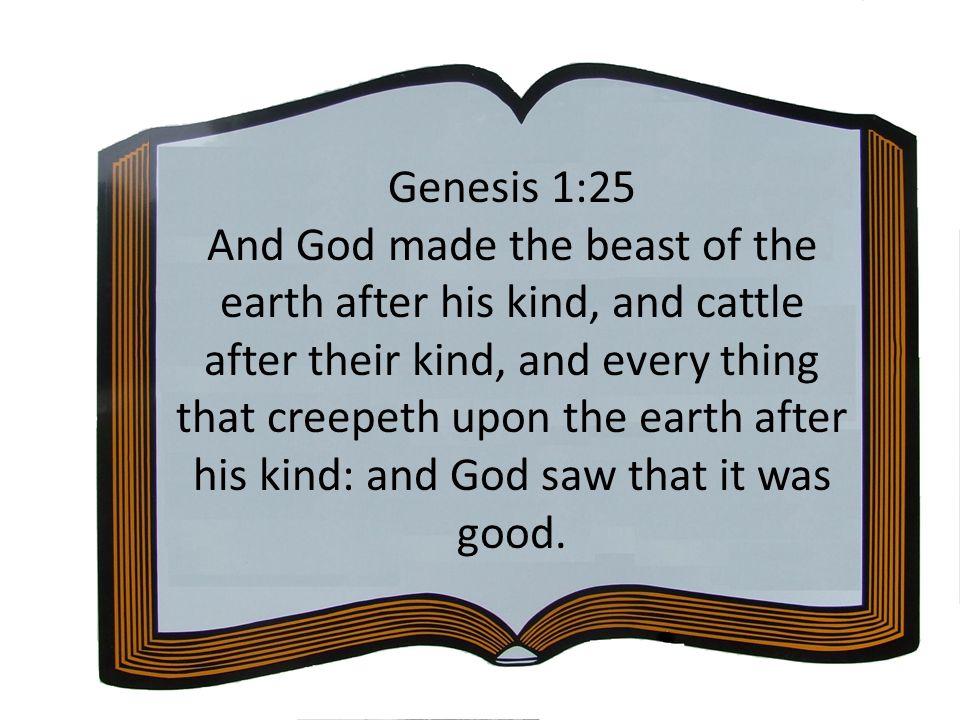 Genesis 1:25