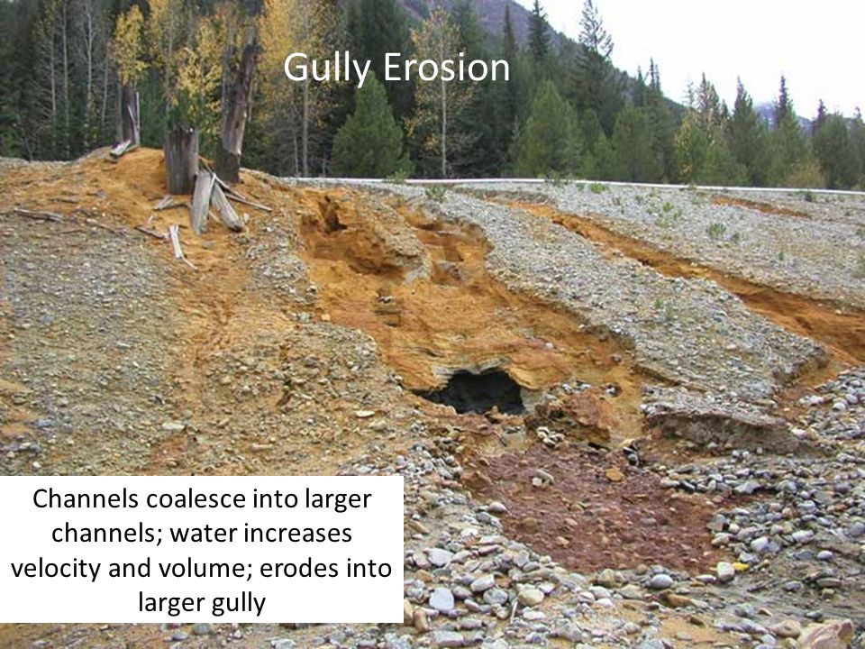 Gully Erosion Channels coalesce into larger channels; water increases velocity and volume; erodes into larger gully.