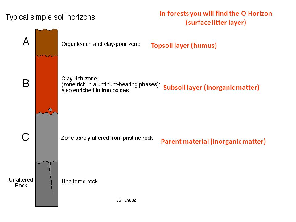 In forests you will find the O Horizon (surface litter layer)