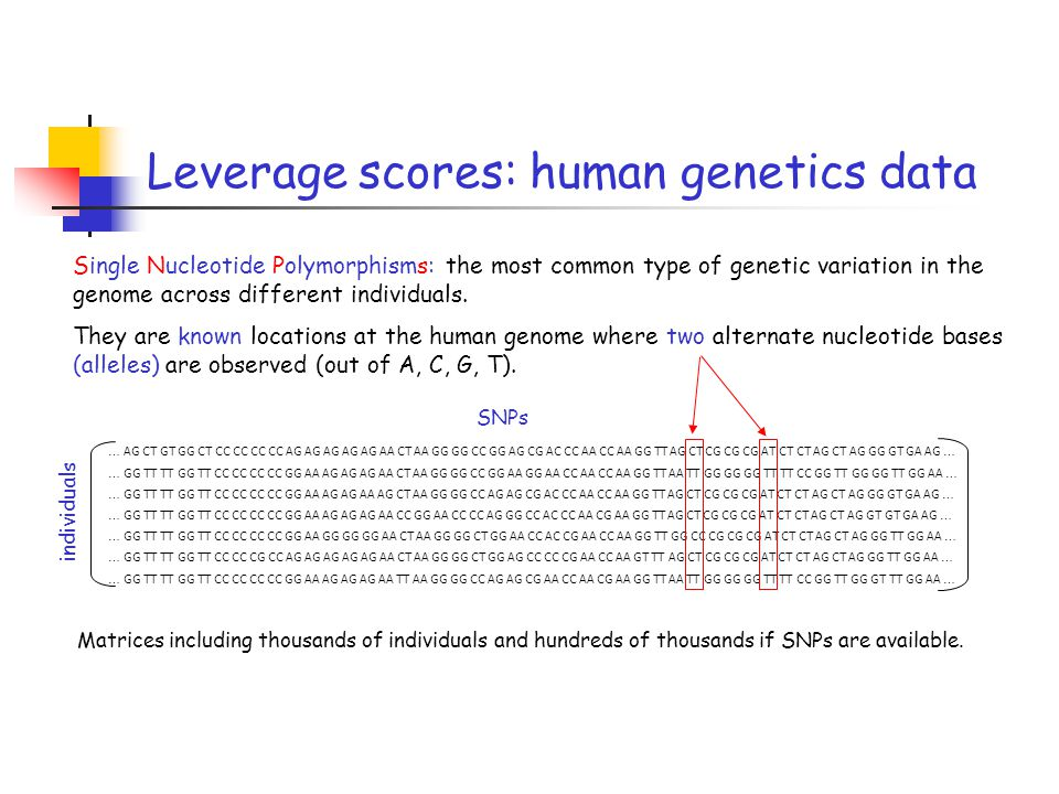 Leverage scores: human genetics data