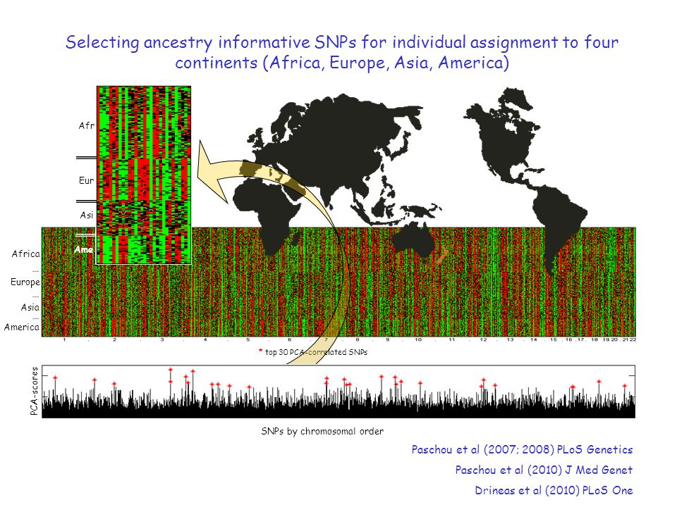 Selecting ancestry informative SNPs for individual assignment to four continents (Africa, Europe, Asia, America)