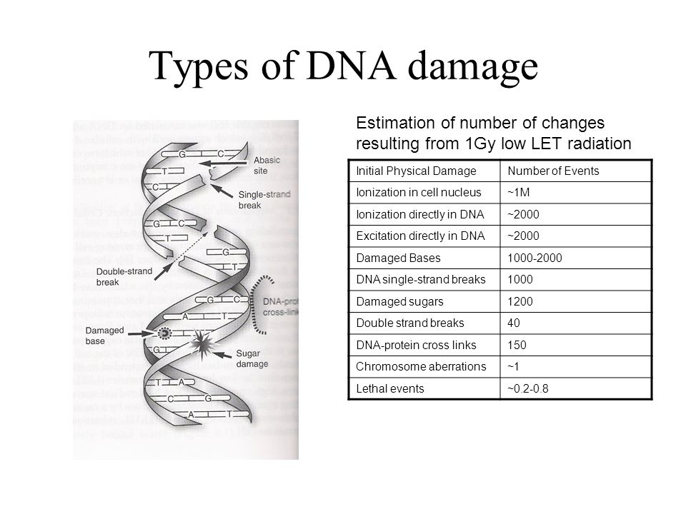 Types of DNA damage Estimation of number of changes resulting from 1Gy low LET radiation. Initial Physical Damage.