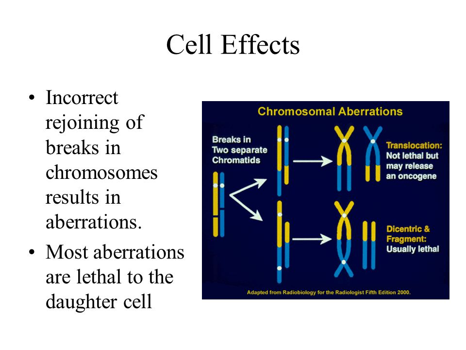 Cell Effects Incorrect rejoining of breaks in chromosomes results in aberrations.