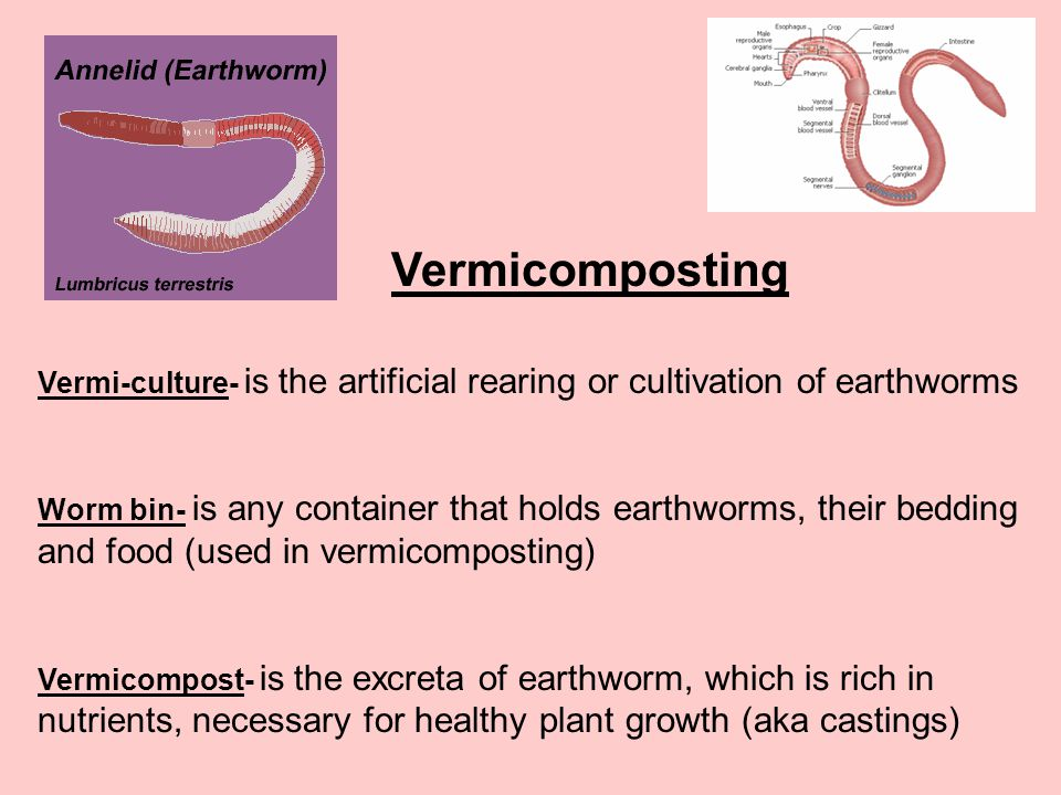 Vermicomposting Vermi-culture- is the artificial rearing or cultivation of earthworms.