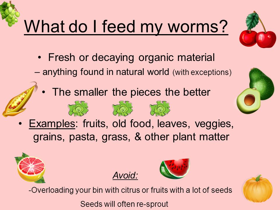 What do I feed my worms Fresh or decaying organic material